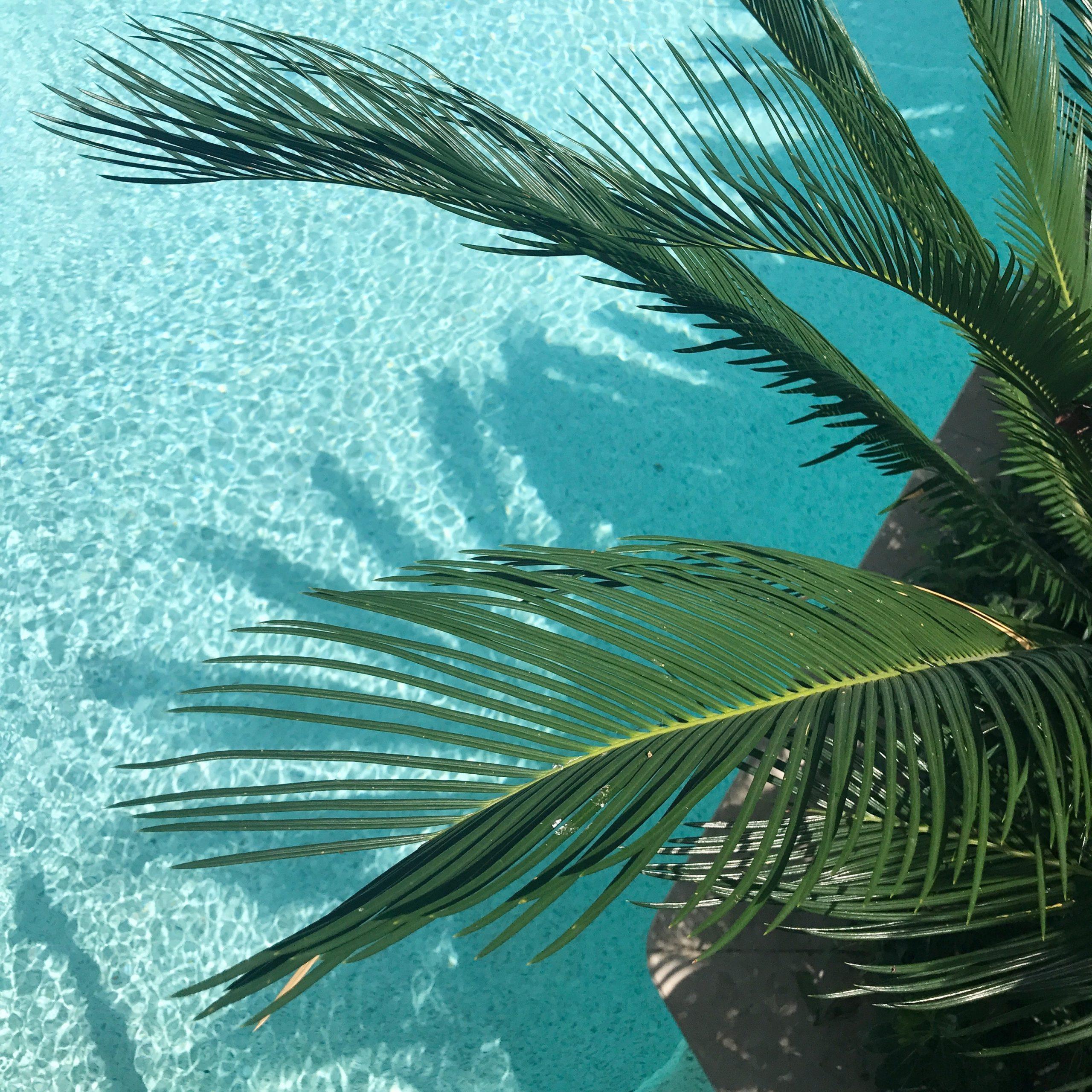 Zo maak je van je tuin een tropisch paradijs